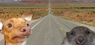 Ron and Stampy hit the Road